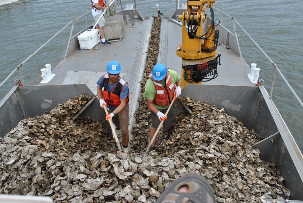 oysterrestorationonthelafayette.jpg